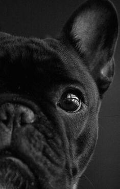 we love frenchies | French bulldog | via LADmob.com