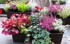 Fall Flowers, Pink Flowers, Fall Containers, Autumn Garden, Window Boxes, Garden Pots, Container Gardening, New Homes, Green