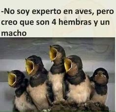 Imagenes de humor mañanero maquinola - Taringa!