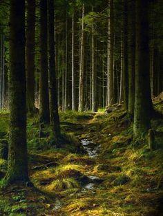 Norwegian woods - looks mossy.  Not!  Rocks, rocks, rocks.  Only 3% of Norway is tillable.
