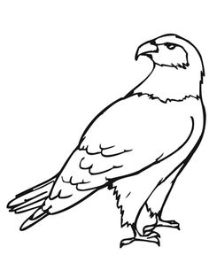 Magpie Bird Coloring Page Prater Lane 3 4 year olds