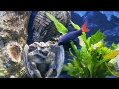Pet Supplies Candid Fish Tank Light 90cm 3 Foot Freshwater Marine Aquarium Led Pet Supplies