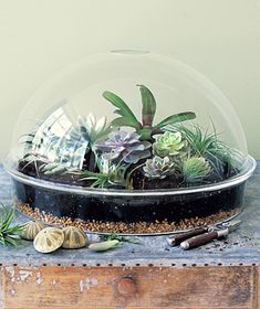 http://www.realsimple.com/home-organizing/gardening/outdoor/garden-00000000006257/page3.html    DIY Terrarium- do it!