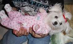 Maltese puppy wearing pajamas and bunny slippers from department store baby clothes section.