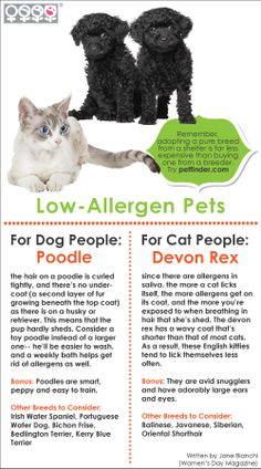 Do you suffer from pet allergies? Although no animals can be completely allergen-free, here are some low-allergen cats and dogs. #Infographic #Allergies #Pets