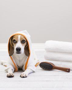 Dog bath: 6 tips to make dog baths easy! #dogbath #doghealth