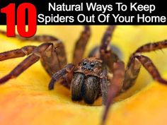 10 Natural Ways To Keep Spiders Out Of Your Home
