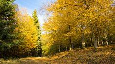 'Laub und Nadelbäume zieren den Herbst' von Ronald Nickel bei artflakes.com als Poster oder Kunstdruck $6.48