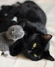 ♥ Mommy can I has a cuddle too