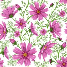 cosmos all day every day Wallpaper Samples, Love Wallpaper, Wallpaper Backgrounds, Wallpapers, Cosmos Flowers, Pink Flowers, Free Background Patterns, Flower Prints, Flower Art