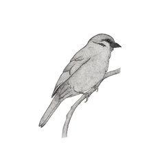 A bird named Johan by hannighan