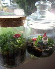 ... Terrarium with gnomes!