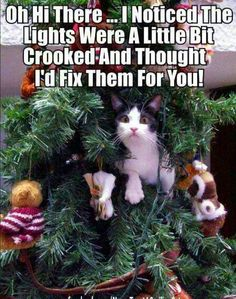 Cat in christmas tree - meme - http://jokideo.com/cat-in-christmas-tree-meme-2/
