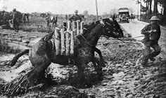 The forgotten ANZAC horses. Millions were used during World War 1 as Cavalry horses on the Front Line for transportation, pulling heavy wagons of food & ammunition for hour after hour.