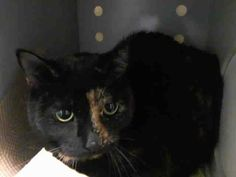 TO BE DESTROYED 4/8/14 Brooklyn Center My name is DELLY. My Animal ID # is A0995577. I am a spayed female tortie domestic sh. The shelter thinks I am about 7.  I came in as a STRAY on 04/03/2014 from NY 11239, ABANDON. https://www.facebook.com/nycurgentcats/photos/pb.220724831278845.-2207520000.1396914346./769694393048550/?type=3&src=https%3A%2F%2Fz-1-scontent-a.xx.fbcdn.net%2Fhphotos-frc1%2Ft1.0-9%2F1970968_769694393048550_7025598461594887421_n.jpg&size=640%2C480&fbid=769694393048550
