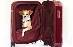 Good selection of luggage for summer travel via @Bethany Shoda Salvon (BeersandBeans)