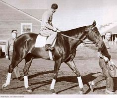 Bold Ruler. Secretariat's sire, beautiful.