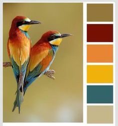 SFR4 - Color Challenged !! | Paper Pleasing Ideas | Bloglovin
