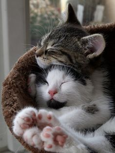 Kitten sisters' hug by Zruda  Love the little pink pads on their paws.