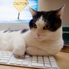 use of laptop essay