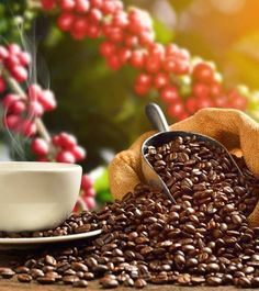 Do you passionately crave for a daily cup of coffee? If yes, then these eye-opening benefits of caffeine will surely amaze you. Know here caffeine benefits. Coffee Art, Coffee Shop, Coffee Lovers, Caffeine Benefits, Coffee Good For You, Coffee Process, Hair Health And Beauty, Best Beans, Dried Oranges