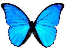 Aquamarine butterfly. Repinned from Chynna Hedstrom.