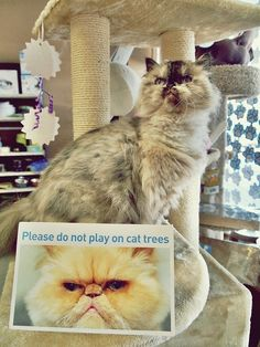 {Please do not play on cat trees} this makes me giggle.