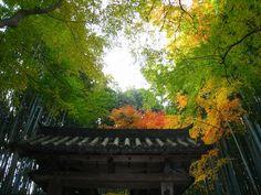 jizo council, kyoto 竹の寺