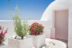 Villa à louer pour 8 personnes. Villa for rent for 8 people. #villa #rental # santorini #dreamhouse #hébergement Santorini, Villas, Infinity, Plants, People, Outdoor Living Spaces, Infinite, Villa, Plant