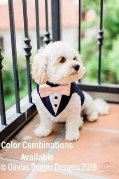 Blue Formal Dog Tuxedo ,Wedding Tuxedo For Dogs ,Custom Made Suit ,pet wedding attire Tuxedo, with choice of color bow tie Blauer formaler Hundetuxedo-Hochzeits-Smoking für Hunde nach Maß Dog Wedding Outfits, Dog Wedding Attire, Wedding Dogs, Dog Outfits, Dog Wedding Dress, Wedding Tuxedos, Blue Tuxedo Wedding, Formal Tuxedo, Wedding Wear