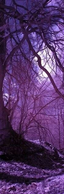 Moonscape in a purple forest. Enchanting and haunting...