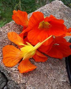 #natural #color #anaranjado #orange
