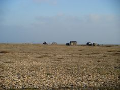 Dungeness beauty