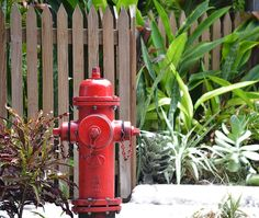 Red Fire Hydrant - Wandering around Key West sherry dooley