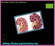 Dog Kidney Disease Life Expectancy 115540 - Start Healing Your Kidneys Today!