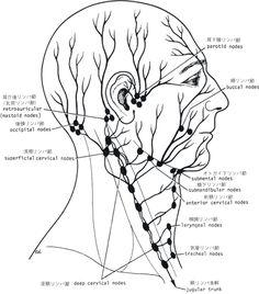 顔 リンパ節