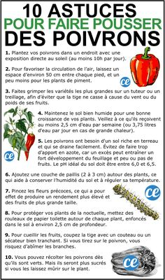 10 market gardening tips for growing beautiful peppers.
