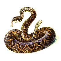 Co na vás prozradí indiánský horoskop? | ProNáladu.cz Snake, Animals, Yandex, Native American, Album, Health, Fitness, Recipes, Astrology