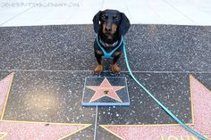 Crusoe got his star!