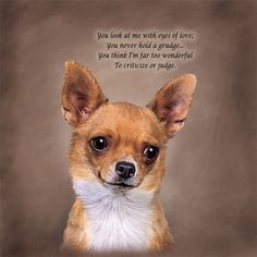 chihuahua quotes and graphics | Chihuahua Poetic Portraits - The Danbury Mint