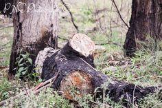 Fallen #photo #photography #photoart #photoblog #ThePhotoHour #PNEPhotography #wildlife #fallenlog #australianbush