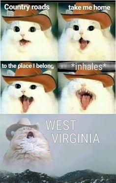 Cute Animal Memes, Funny Animal Quotes, Animal Jokes, Funny Animal Pictures, Cute Funny Animals, Funny Quotes, Funny Meme Pictures, Hilarious Animal Memes, Emoji Quotes