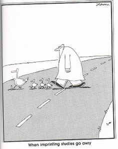 """The Far Side"" by Gary Larson. The truth about Pavlov Cartoon Jokes, Funny Cartoons, Funny Comics, Funny Jokes, Funny Sarcasm, Far Side Cartoons, Far Side Comics, Science Cartoons, Science Humor"