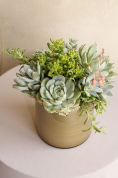 Patrick's Day with our pots of gold and green ☘️🍀 Have a fun and safe holiday! We offer local floral delivery Monday-Friday.plan next week's succulent arrangement TODAY! Small Flower Arrangements, Succulent Arrangements, Fake Flowers, Small Flowers, Small Succulents, Prop Styling, Pot Of Gold, Flower Delivery, Plant Care