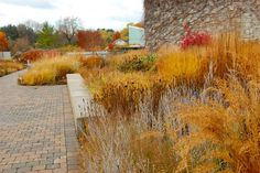 Toronto Botanical Garden in November | The Entry Garden Walk, showing its strong Piet Oudolf design influence – lots of native materials left to do their thing in all seasons. I love the repetition of reds in this fall garden.