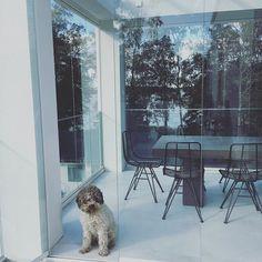"""Architect's Home in 🇫🇮 sanoo Instagramissa: """"Käyttöönottotarkastus meni läpi ja myös Minni kävi omalla tarkastuskäynnillään ja ilmeisesti hyväksyi uuden kodin 😃. Lempipaikaksi nousi…"""" Chair, Furniture, Instagram, Home Decor, Decoration Home, Room Decor, Home Furnishings, Stool, Home Interior Design"""