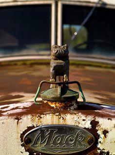 The bulldog hood ornament on a Mack Truck... one tough little doggie! #ReferATruck 'Get er Loaded'