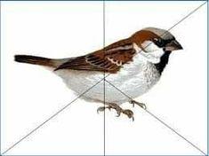 Preschool Education, Preschool Activities, Feeding Birds In Winter, Environmental Education, Pre School, Light Table, Bird Houses, Bird Feeders, Safari
