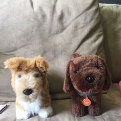For Sale: American Girl Dogs for $25