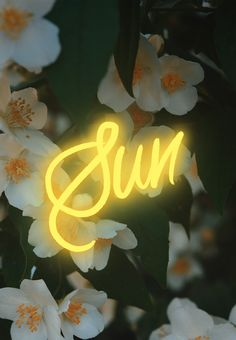 Neon Sun by Cocorrina